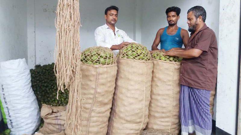 পিরোজপুরের কাউখালীতে আমড়ার বাম্পার ফলন